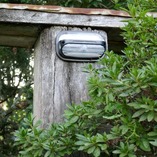 solar outdoor light with motion detector mounted on pole in Brisbane home garden