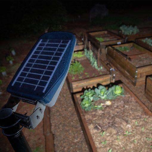 solar panel powered garden light shining light on veggie patch and herb garden in Brisbane